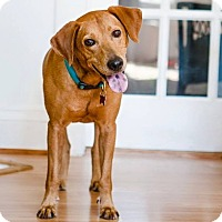 Adopt A Pet :: Parker ~ Adoption Pending - Youngstown, OH