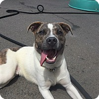 Adopt A Pet :: Marvel - Newtown, CT