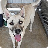 Adopt A Pet :: Ricky - Charleston, AR