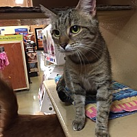 Adopt A Pet :: Jeannie - Morganton, NC