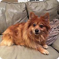 Adopt A Pet :: Lady - Linden, NJ