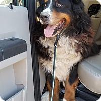 Adopt A Pet :: Sammy - Decatur, IN