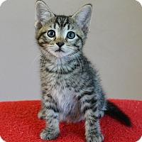 Adopt A Pet :: Zander - Springfield, IL