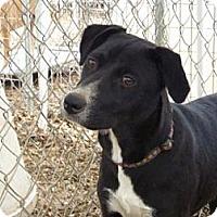Adopt A Pet :: Issa - Fair Oaks Ranch, TX