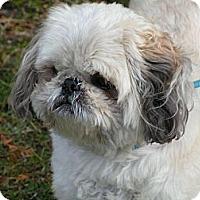 Adopt A Pet :: Paco - Rigaud, QC