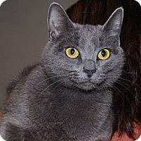 Adopt A Pet :: Bendi - Monroe, GA