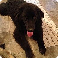 Adopt A Pet :: Hunter - Hamilton, ON