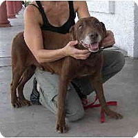Adopt A Pet :: Shaun - Scottsdale, AZ