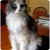 Adopt A Pet :: Brooklyn - Arlington, VA