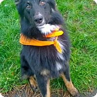 Adopt A Pet :: Ryker - Ashland, OR