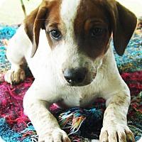 Adopt A Pet :: Jamie - Staunton, VA