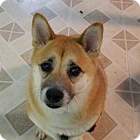 Adopt A Pet :: Zara - Brooklyn, NY