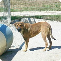 Shepherd (Unknown Type)/Spaniel (Unknown Type) Mix Dog for adoption in Mexia, Texas - Hermione