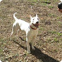 Adopt A Pet :: Yeti - Houston, TX
