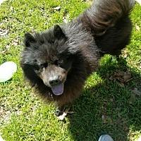 Adopt A Pet :: Rollo - San Antonio, TX