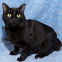 Adopt A Pet :: Chessie - Mt. Prospect, IL