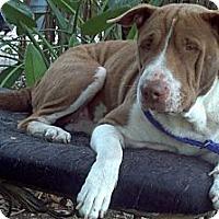 Adopt A Pet :: Sunshine - loxahatchee, FL
