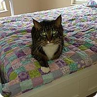 Adopt A Pet :: Howie - Naples, FL