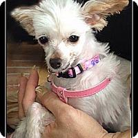 Adopt A Pet :: Jasmine - Fort Braff, CA