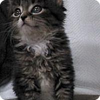 Adopt A Pet :: Fallon - Sterling Hgts, MI