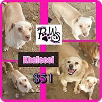 Adopt A Pet :: Khaleesi - Fowler, CA