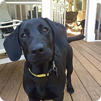 Adopt A Pet :: Hogan - Cumming, GA