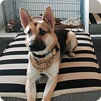 Adopt A Pet :: Mulligan*TRANSFERRED* - Mill Creek, WA