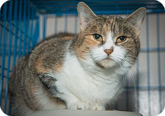 Calico Cat for adoption in New York, New York - Emma
