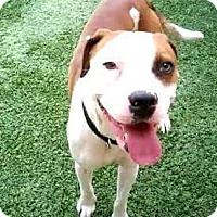 Adopt A Pet :: Yolo - Iowa Park, TX