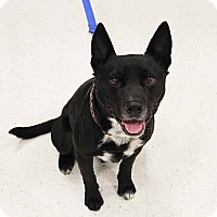 Terrier (Unknown Type, Medium) Mix Dog for adoption in McCormick, South Carolina - Sammy