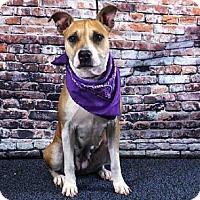 Hound (Unknown Type) Mix Dog for adoption in Sanford, Florida - ROSIO