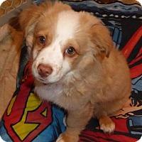 Adopt A Pet :: Gordo - San Diego, CA
