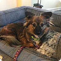 Adopt A Pet :: Minky - Harrison, NY