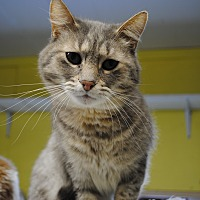 Adopt A Pet :: Toby - Bay City, MI