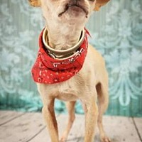Adopt A Pet :: Dino - Scottsdale, AZ