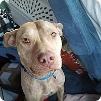 Adopt A Pet :: Hayes - joliet, IL