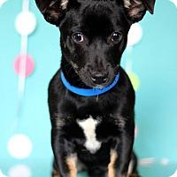 Adopt A Pet :: Jovan - Waldorf, MD