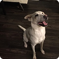 Adopt A Pet :: Bentley - Austin, TX