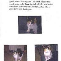 Adopt A Pet :: Queenie - West Los Angeles, CA