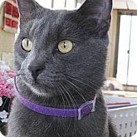 Adopt A Pet :: Joey - Chandler, AZ