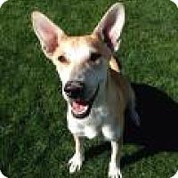 Adopt A Pet :: CONFETTI - Gilbert, AZ