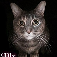 Adopt A Pet :: Lilly - Foster (112) 2015 - Maumelle, AR