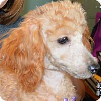 Adopt A Pet :: Monty - Prole, IA