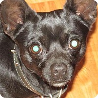 Adopt A Pet :: Batman - Rocky Mount, NC