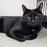 Adopt A Pet :: Johnny Cash - Lexington, KY
