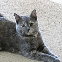 Adopt A Pet :: Pearl - Kitten - Harrisburg, PA