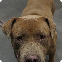 Adopt A Pet :: Mary Jane - Farmington, NM