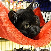 Adopt A Pet :: Figi - The Colony, TX