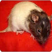 Adopt A Pet :: Bandit - Winner, SD