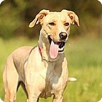 Adopt A Pet :: Zena - Knoxville, TN